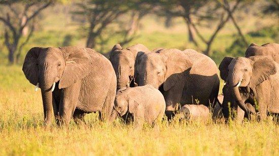 Zdjęcie Tarangire National Park