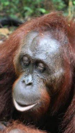 Kalimantan Φωτογραφία