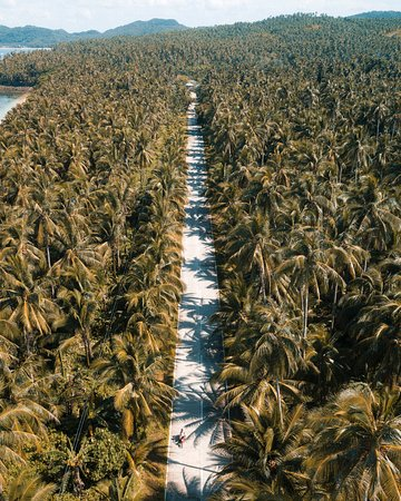 Filippijnen: Road through the palms - Philippines