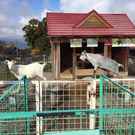 Nakatsugawa City Fureai Farm