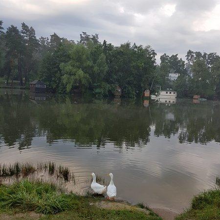 Дача: озеро