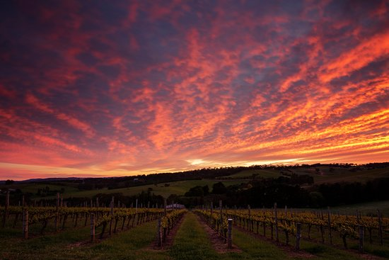 """The Lane Vineyard is one of Australia's """"Ultimate Wineries"""" and I visited when I was touring South Australia on a wine trip. haha. The Lane offers a really unique cellar door experience, especially if you're lucky enough to be invited out the back to taste the wine straight out of the barrel."""