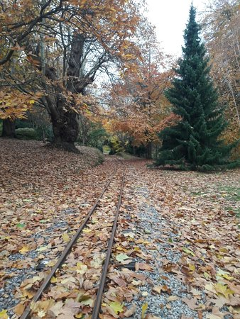 Bicton Park Botanical Gardens Picture