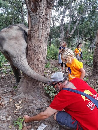 Visit and interact with elephants at Blue Tao Elephant Village.
