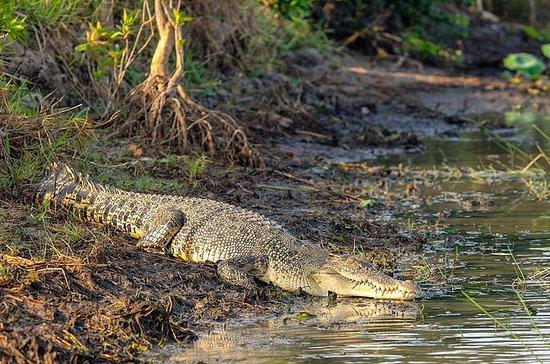 Crocodile Cruise - Spot krokodillen ...