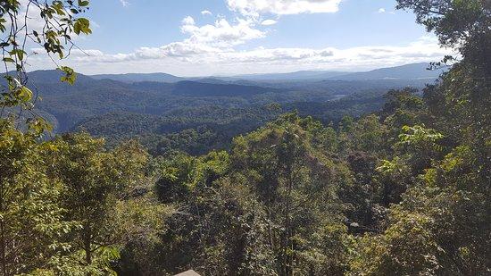 Bilde fra Skyrail Rainforest Cableway