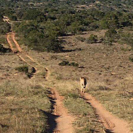 Amakhala Game Reserve ภาพถ่าย