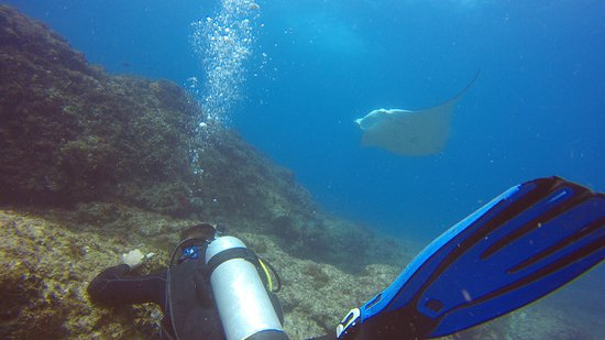 Scuba Shane Diving