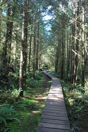 Rainforest Trail Photo
