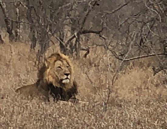 Foto de Ngala Private Game Reserve