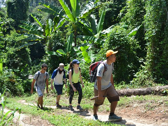 Jungle Trekking Chiang Mai