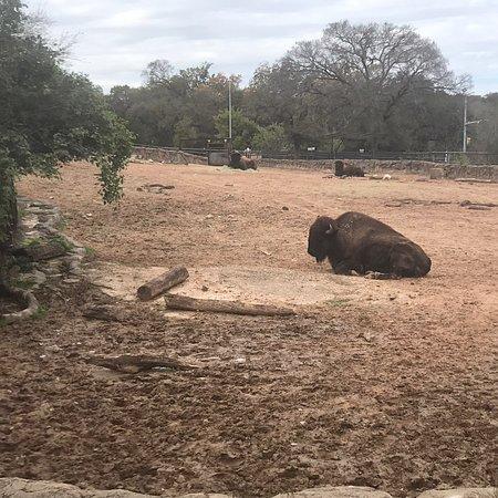 Cameron Park Zoo-bild