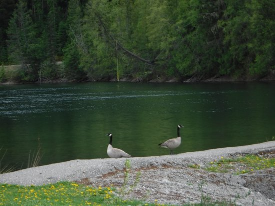 Likely, Canada: Every Spring the Canada Geese come and visit.... in the summer the Ducks, in the winter the Snow Geese.