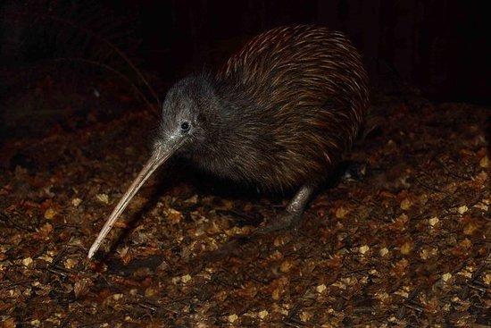 Ingresso Parco Kiwi Birdlife