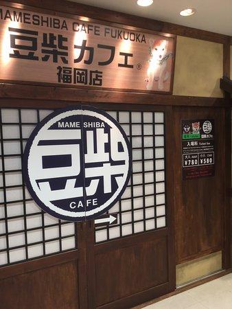 Mameshiba Cafe Fukuoka