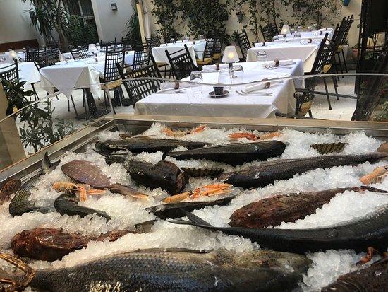 Fish of the Adriatic Sea