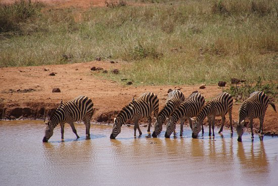 F. King Tours and Safaris - Day Tours Picture