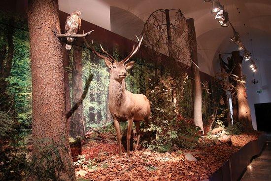 Muzeum Przyrodnicze Swietokrzyskiego Parku Narodowego na Swietym Krzyzu