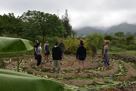 Pai Seedlings
