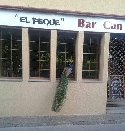 Centelles, Spanje: El primer cliente de la mañana🦃⏰