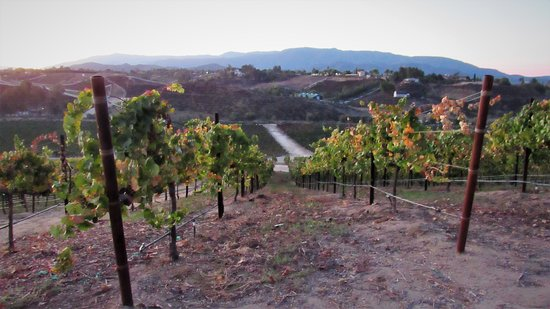 Wine and Wonder in the Temecula Hills.