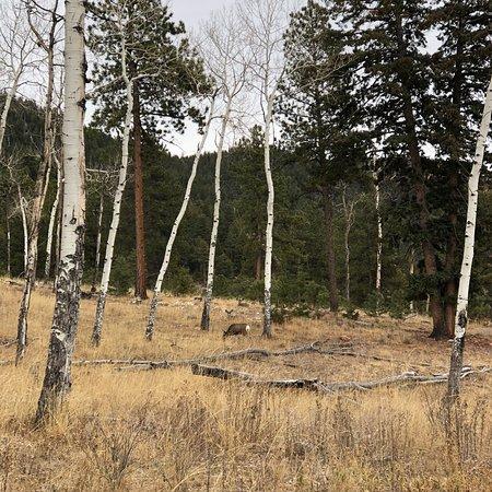 Pine Foto