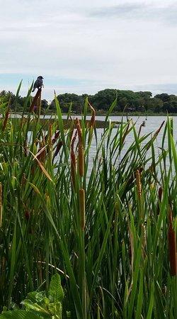 Bilde fra Lagoa Da Prata
