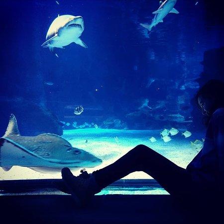 Newport Aquarium صورة فوتوغرافية