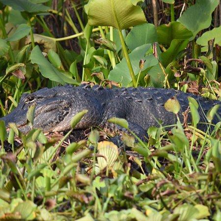 Everglades Wildlife Management Area Foto