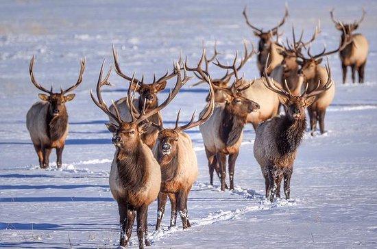 Grand Teton og National Elk Refuge...
