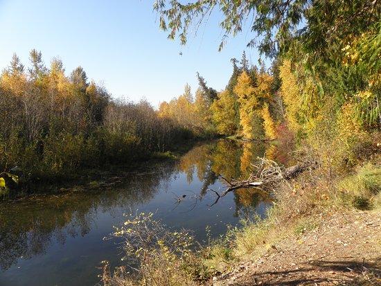 Scotch Creek Picture