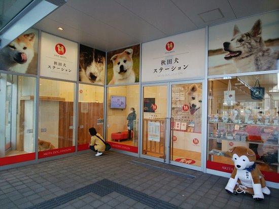 Akita Dog Station