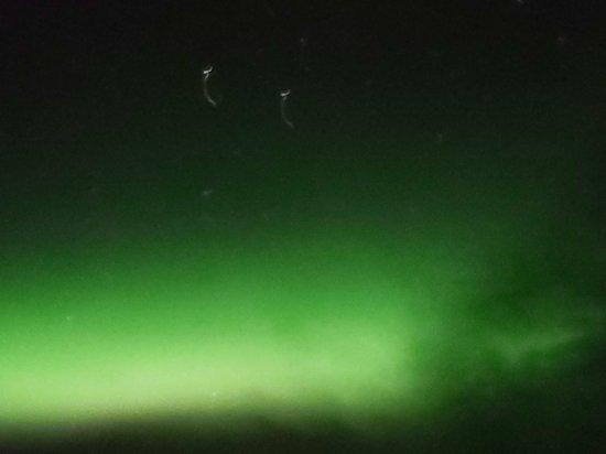 Reykjavik Excursions Northern Lights Tour صورة فوتوغرافية