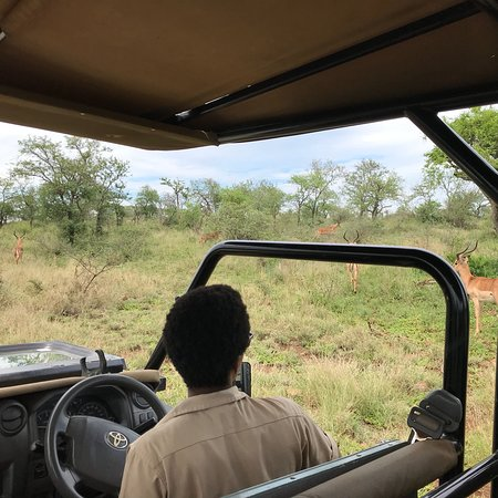 White Elephant Safari Lodge Photo