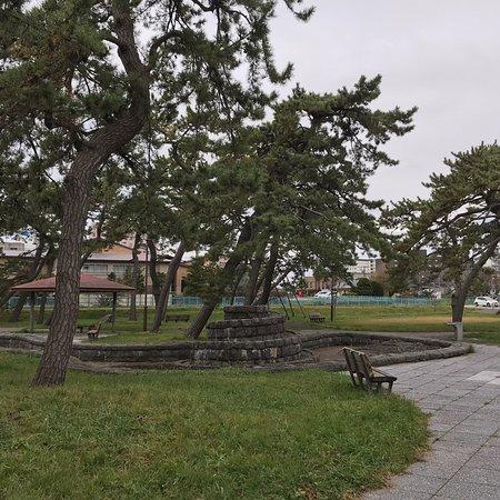 松と芝生の公園