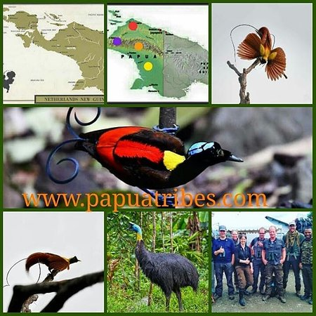 West Papua, Indonesia: http://www.trek-papua.com/?page_id=69
