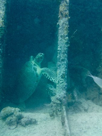 Rainbow Reef Dive Center: we found a napping turtle