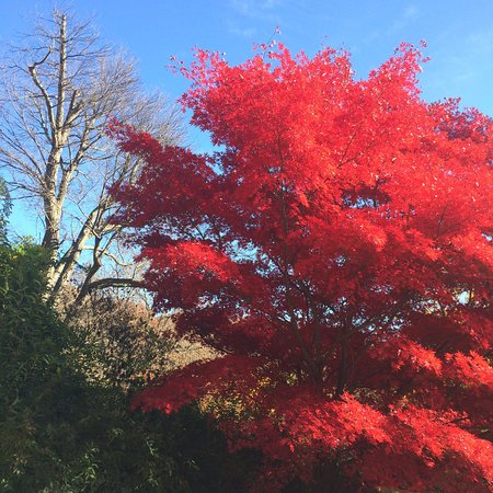 Foto de Skylands New Jersey Botanical Gardens