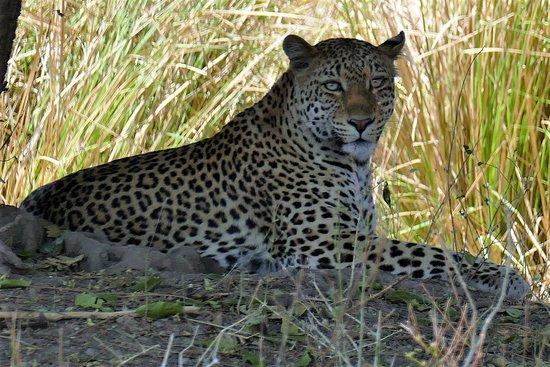 Mana Pools National Park, Zimbabwe: What a Beauty !