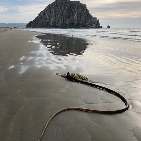 Bilde fra Morro Rock