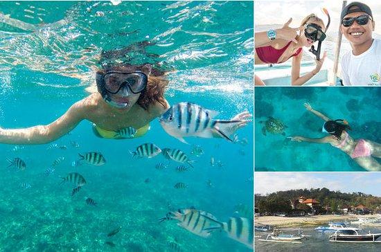 バリ島ブルーラグーンでシュノーケリング体験、昼食と移動付き