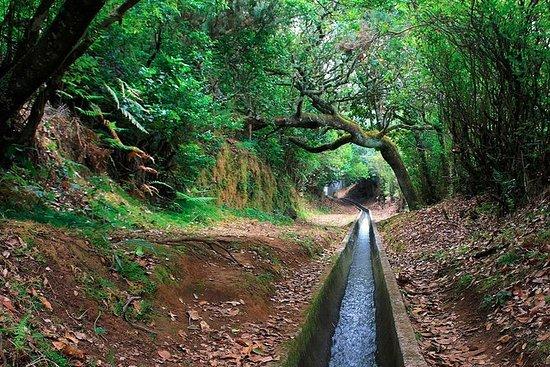 Levada-Wanderung von Ribeiro Frio...