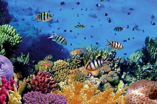 Voyage de plongée en apnée dans le...