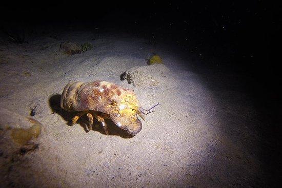 Nacht- Tauchgang für Certified Diver