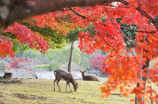 8-Hour Private Tour to Nara and Kyoto...