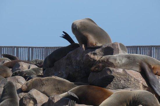 Swakopmund Cape Cross Robbenkolonie...