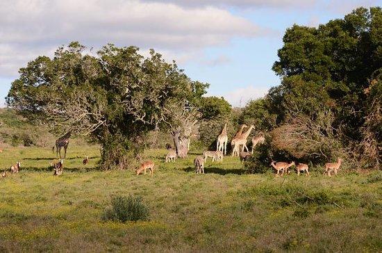 Parc national Addo Elephant et...