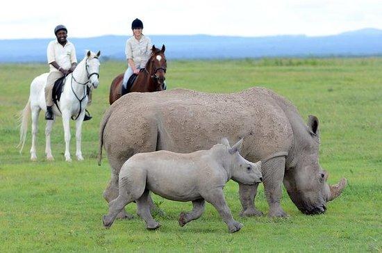 Andar com rinocerontes