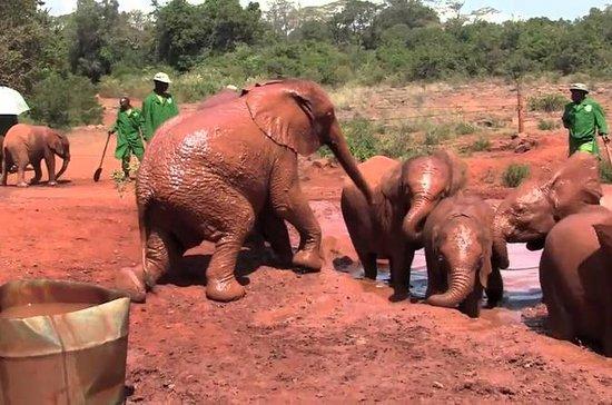 David Sheldrick Wildlife Trust...