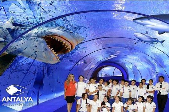 Tour Acquario di Antalya da Kemer